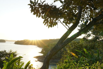 tropical jungle lanscape on sunset