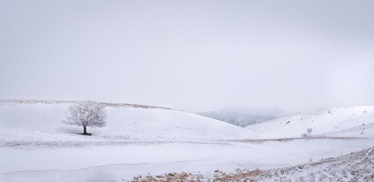 lone tree in the winter in minnesota