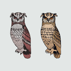 Graphic vector owls set isolated