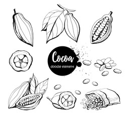Hand drawn sketch cocoa product. Vector illustration of natural healthy food.