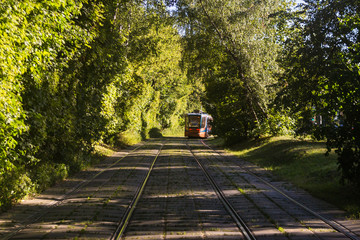 Tram rides through the summer park