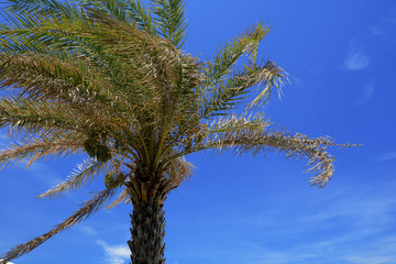 Coconut tree, Tropical beach.