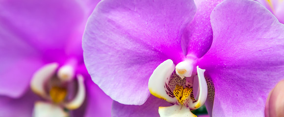 Pink orchid backgrounds