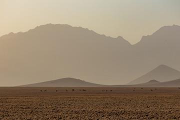Zebras und Antilopen in der Wüste