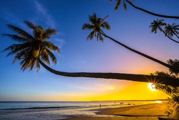 Palm trees and amazing  sky on sunrise at Fishing Village , Binh Thuan, Vietnam . Coconut Tree with Beautiful and romantic sunrise at Mui ne