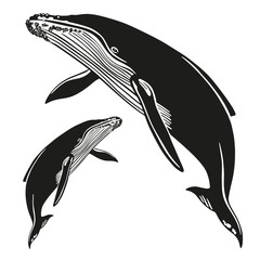 Set of vector whales and dolphins. Hand drawn illustration