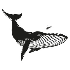 Whale vector hand drawn illustration.