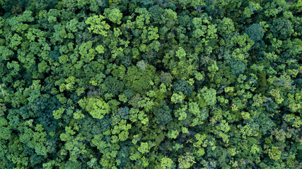 Forest and tree landscape texture abstract background, Aerial top view forest atmosphere area,...