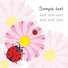 Vector illustration with a ladybug on the flower