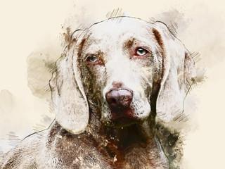 Hundezeichnung im Watercolor Design