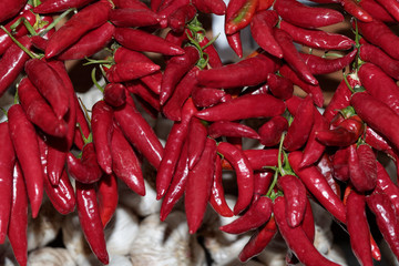 Close-up of hanging red chili peppers bunches