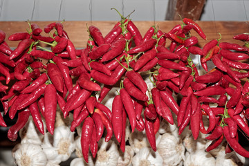 Hanging red chili peppers bunches