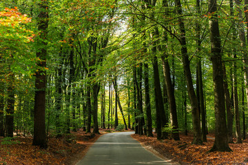 Lonely forest road with beautiful green canopy above.