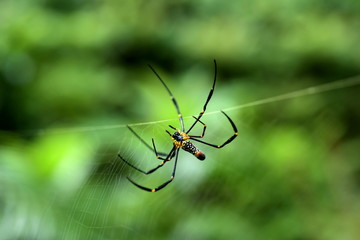 The spider is woven with green leaves as the background.