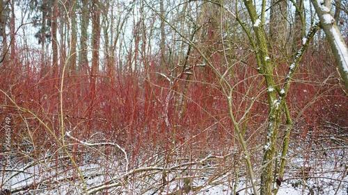 Blackberry Himbeeren Winter Forest Tree Nature Autumn