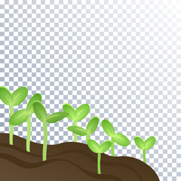 The soil is fertile and plants, sprouts. Agriculture, spring, planting, new life cycle. Sunflower, vegetable or melon seedlings young sprouts. Field and plants on a transparent background.1