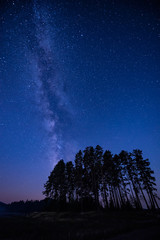 Long time exposure night landscape with Milky Way Galaxy above high coniferous trees