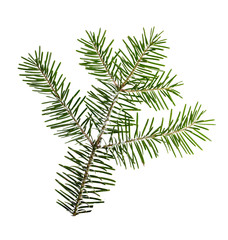 Fir tree branch isolated on white.