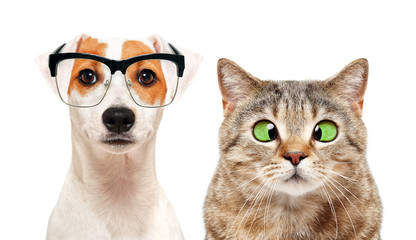 Portrait of dog and cat with eye diseases isolated on white background