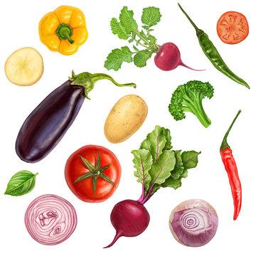 Tasty juicy vector veggies painting