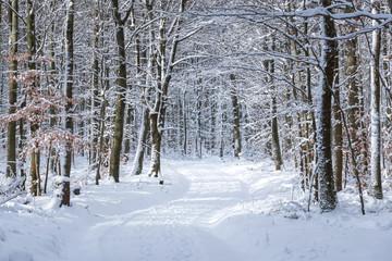 Winter Wald mit Waldweg im Schnee