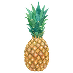 Pineapple. Hand drawn watercolor illustration. Isolated on white background.