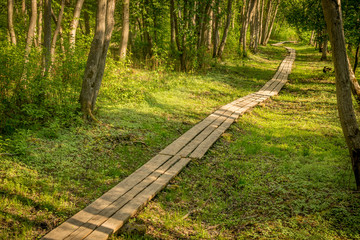 wooden boardwalk leading through a forest. a path through the trees.