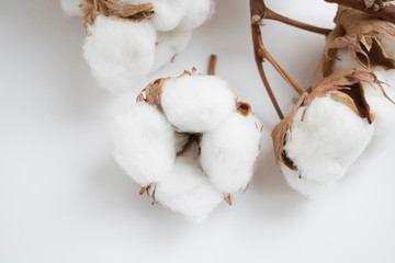 White cotton flowers.