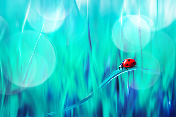 Spring summer natural background. Red ladybug on blue grass. Artistic creative bright multi-colored image.