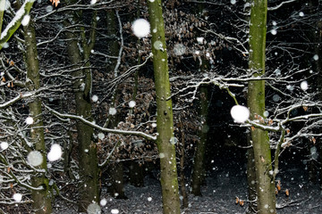 fallende Schneeflocken in Nahaufnahme im dunklen Wald. Standort: Deutschland, Nordrhein-Westfalen, Borken