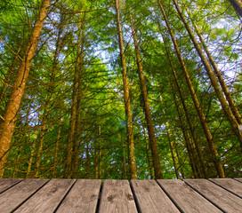 paseo de madera junto al bosque
