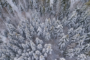 Spoed Fotobehang Bleke violet Winter scenery in Silesian Beskids mountains. Top aerial view of snow mountain landscape with trees.