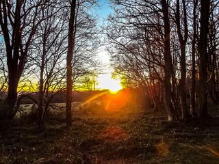 Foto op Canvas Australië sunset in forest
