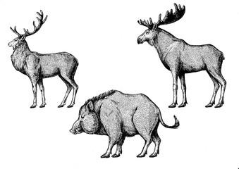 Forest animals. Moose, elk, boar, hog, pig, aper.