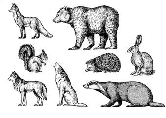 Forest animals. Fox, bear, squirrel, wolf, badger, hedgehog, hare, rabbit, bunny.