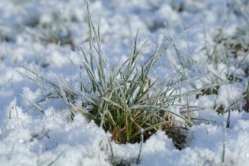 Makro eines Grassbüschels auf einer Wiese mit Eis und Schnee bei Frost