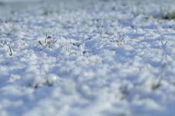 Wiese im Winter mit Schnee und Eis