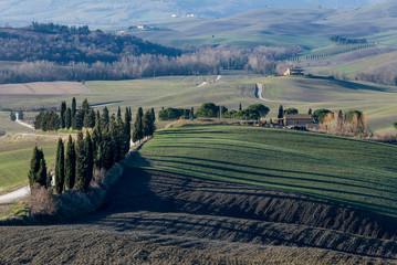 The long shadows of cypress trees on the fields of the Tuscan countryside in the province of Siena, Tuscany, Italy