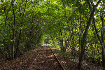 Train tracks inside a forest that has grown to a tunnel around them. Trolley available to ride along the tracks and back. Shot during summer on a warm day in southern Sweden.