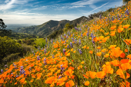 Wildflowers growing on a mountainside