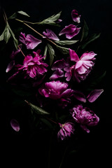Purple peonies with stems and leaves