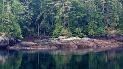 Alaskan Conifer Forest