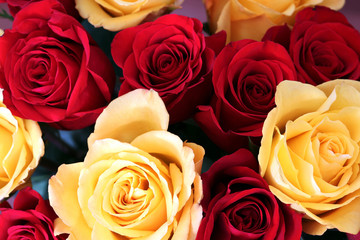 Floral background with red and yellow roses. Bunch of bright red and yellow roses close up.