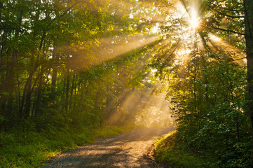 Sunstreaks of the morning along a mountain road.
