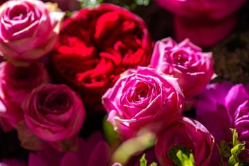 美しい花の集合イメージ