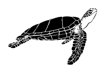 graphic sea turtle,vector illustration of sea turtle