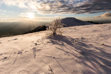 Subasio mountain (Umbria, Italy) in winter, covered by snow, with plants at golden hour