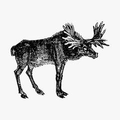 Moose vintage style