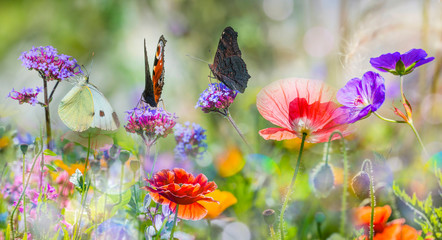 summer meadow with red poppies and butterflies Wall mural
