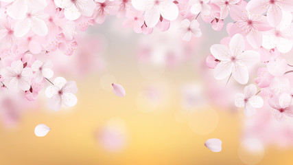Beautiful delicate background with blossoming light pink sakura flowers with place for text. Delicate floral design. Realistic  vector illustration.